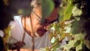 Giovanni Castagnero nella sua magnifica vigna nel Monferrato.
