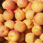 Detail of delicious fresh apricots in basket. Shallow DOF.
