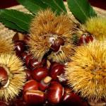 frutta-verdura-di-stagione-novembre-castagne