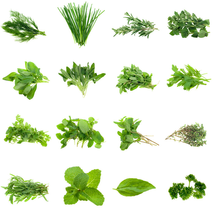 piante da tisana