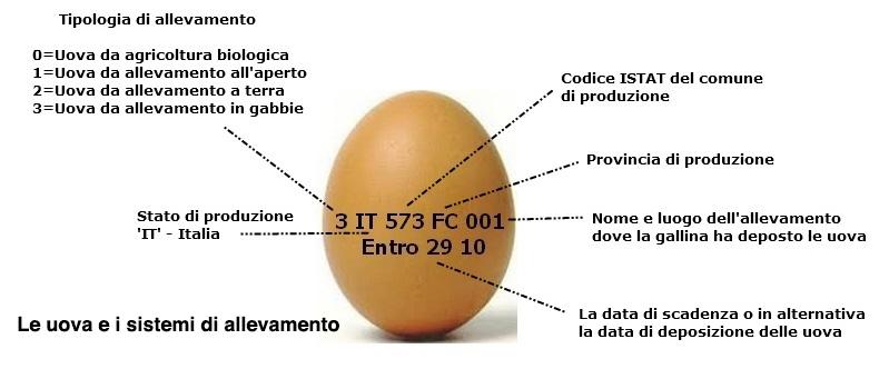 codice uova