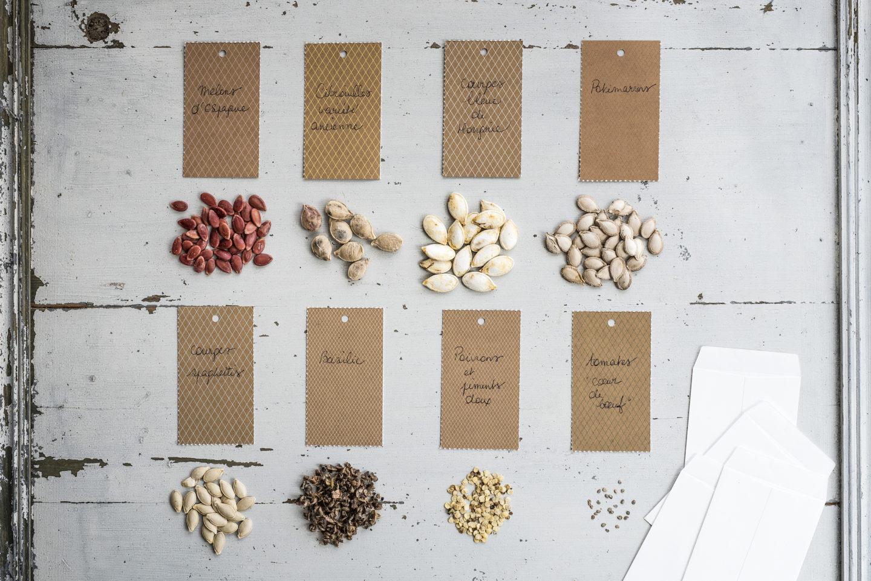 semi da piantare