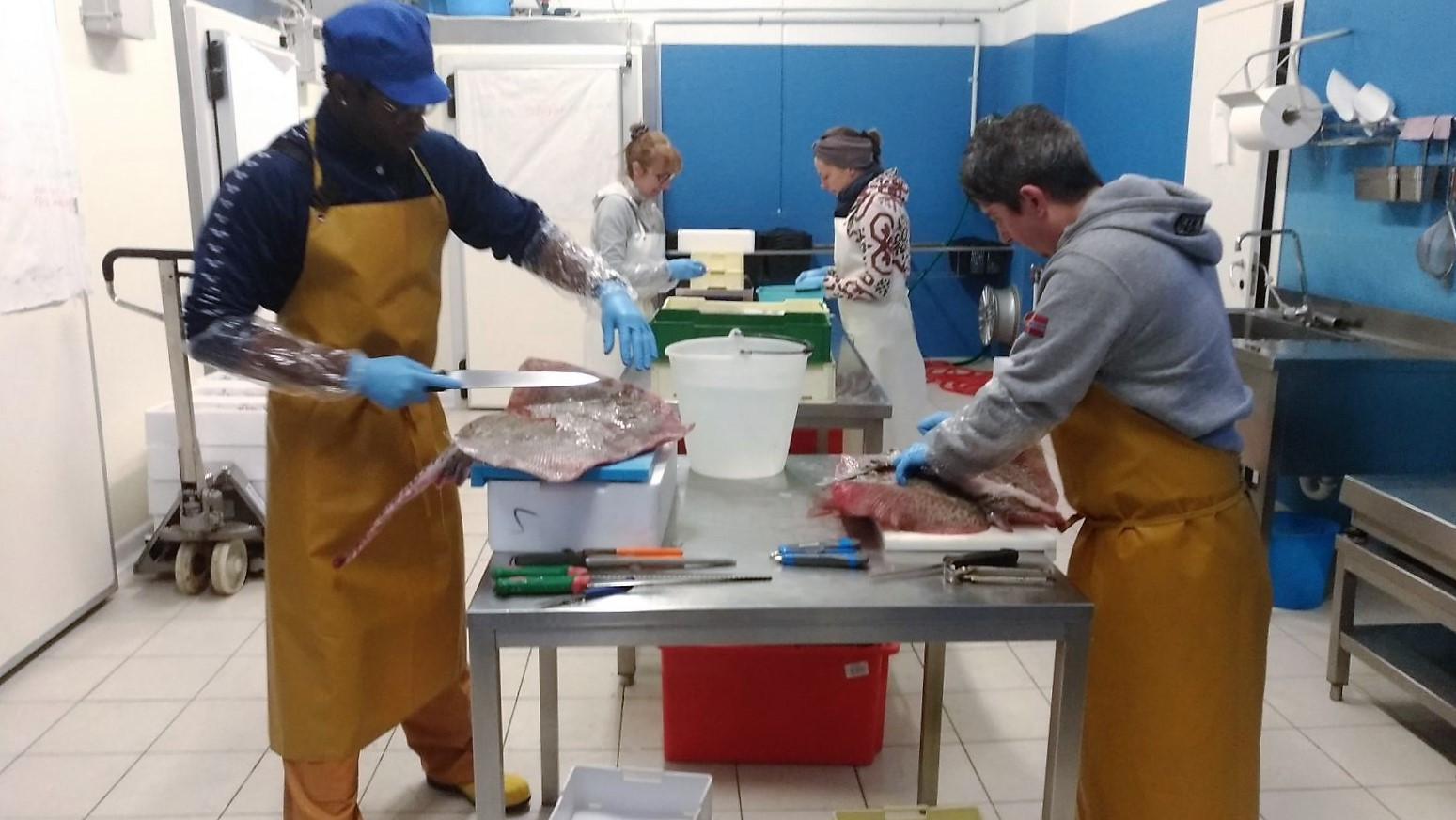 laboratorio pesce