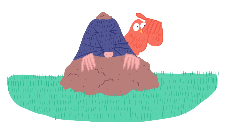 talpa in giardino