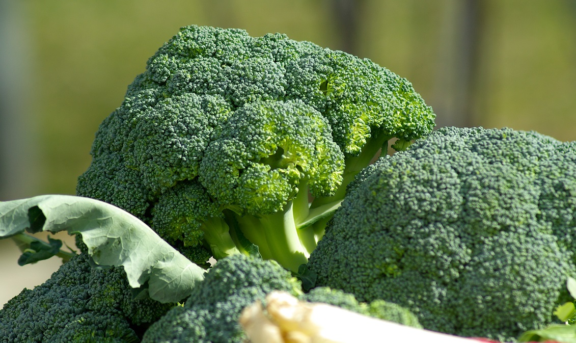 i broccoli fanno bene al cervello
