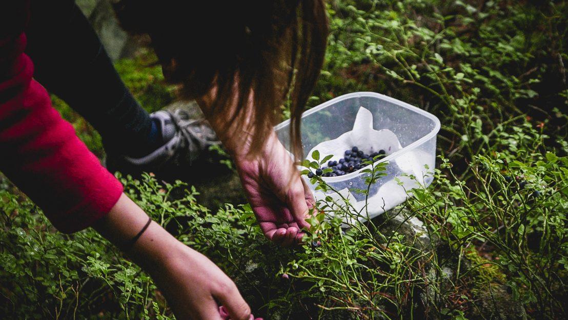 come fare foraging