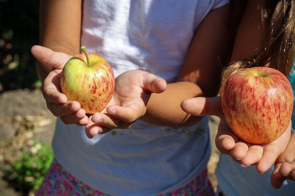 pesticidi in frutta e verdura