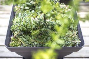 riciclare albero di natale
