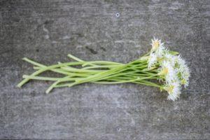 Fiori di aglio orsino