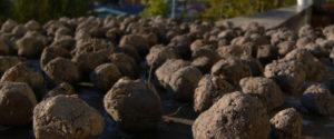palline di semi