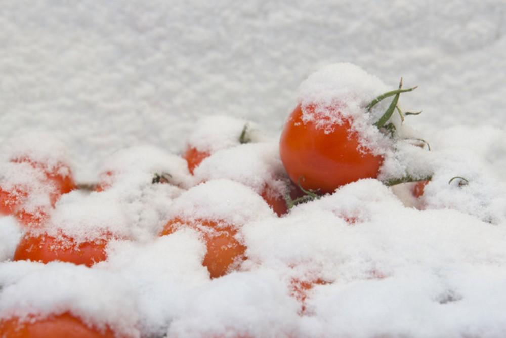 pomodori in inverno