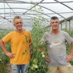 Fratelli Bosco vicino ai pomodori