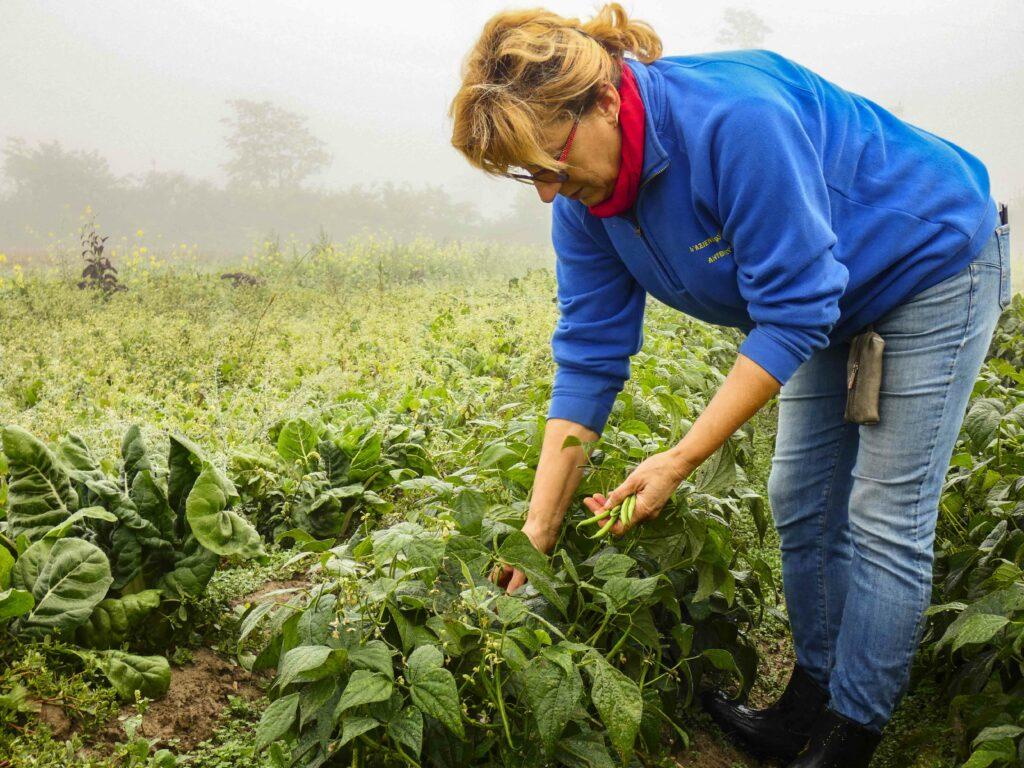 Antonietta mentre raccoglie i fagiolini