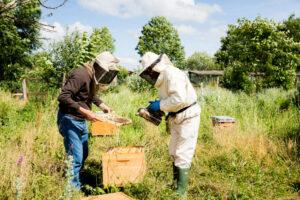 api e agroecologia