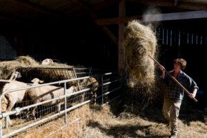 contadino in fattoria