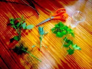 pezzi di piante