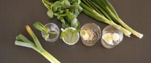 far ricrescere le verdure dagli scarti