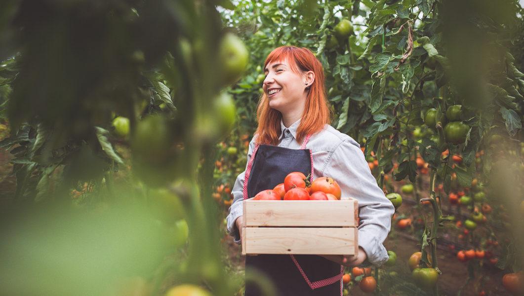 Donna con cassa di Pomodori