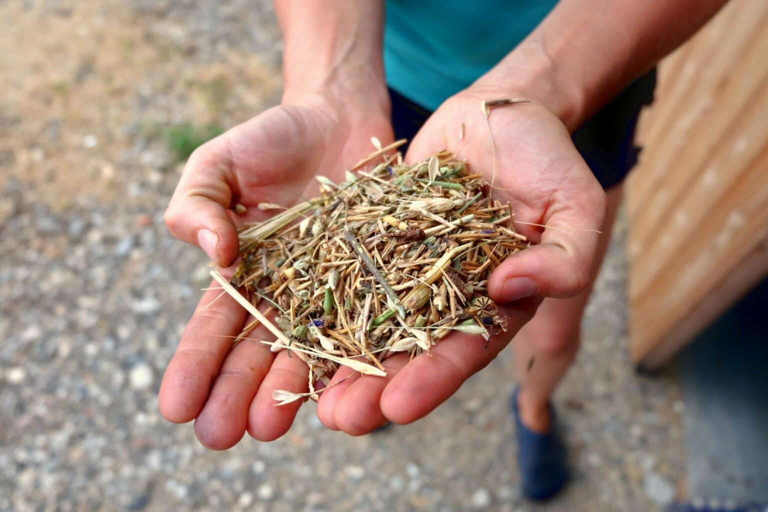 grano in mano